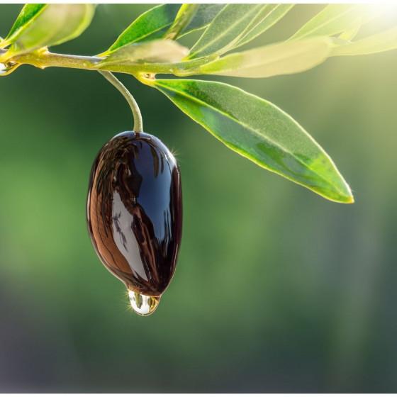 Poggio Reale Olio Extravergine di Oliva Cellina di Nardo Orcio Giallo Litri 0,5